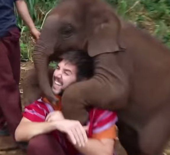 Este elefante bebê pedindo colo é tudo o que você precisa ver hoje [vídeo]
