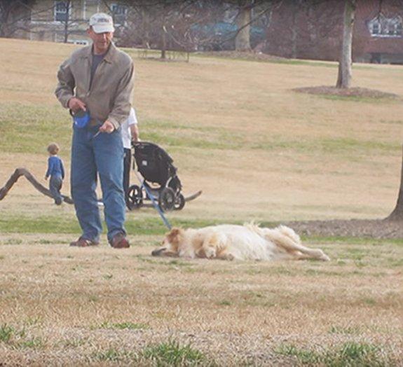 Cachorro se faz de morto para não ir embora de parque