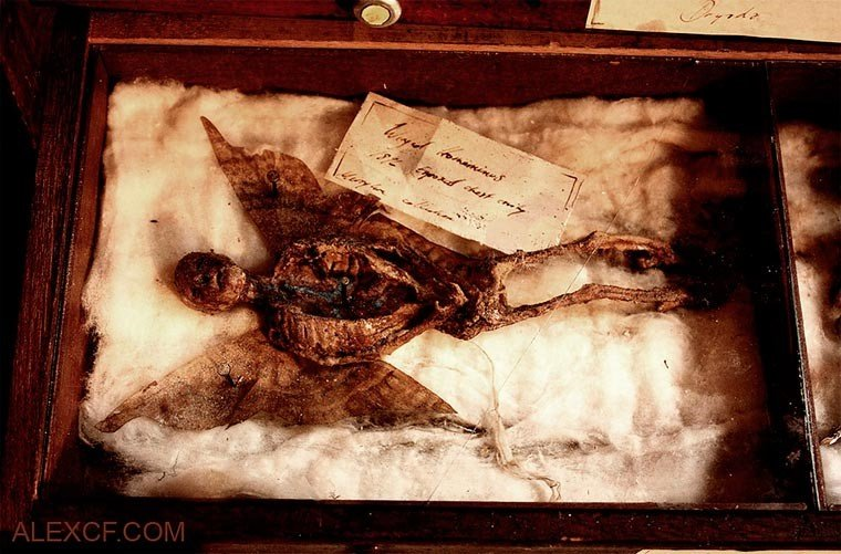 Esqueletos de criaturas fantásticas confundem pessoas