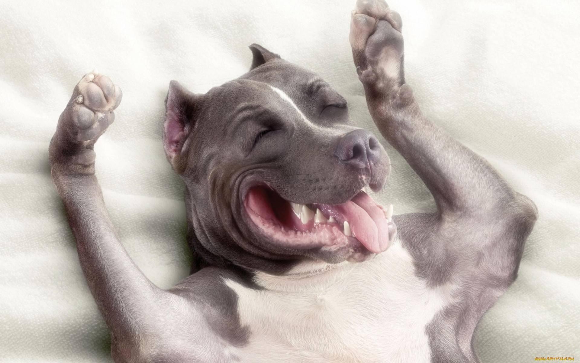 Por que quase não vemos cachorros com cáries?  - Mega Curioso