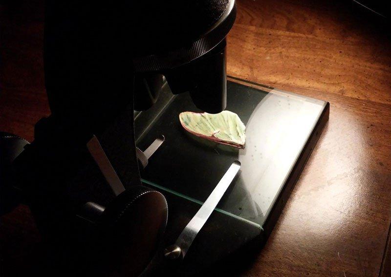 Mega Enigma: você sabe o que é essa imagem vista no microscópio?