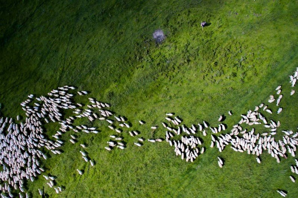 Rebanho de ovelhas na região central da Romênia, segundo lugar na categoria Natureza