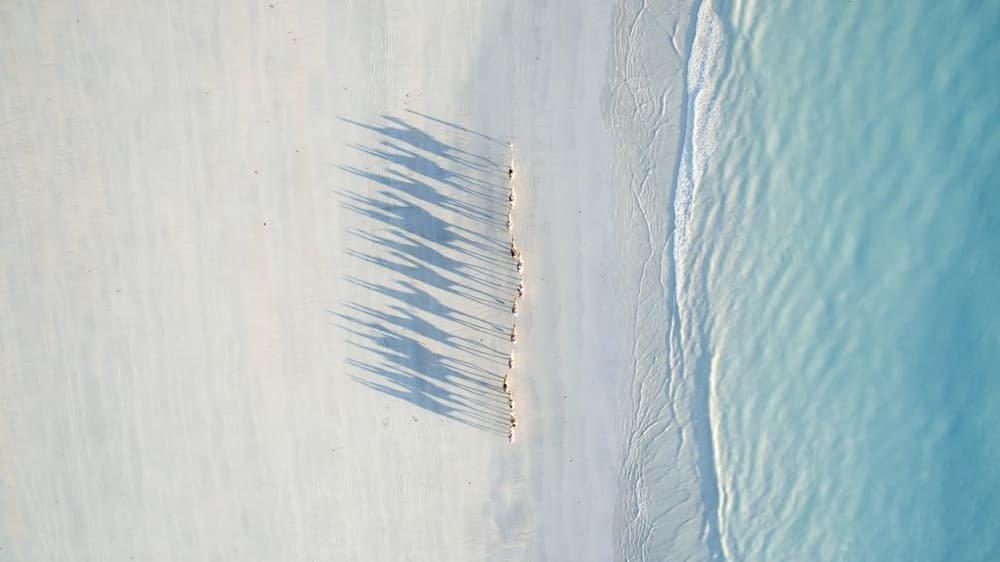 Camelos andando em fila e projetando suas sombras nas areias de Cable Beach, na Austrália