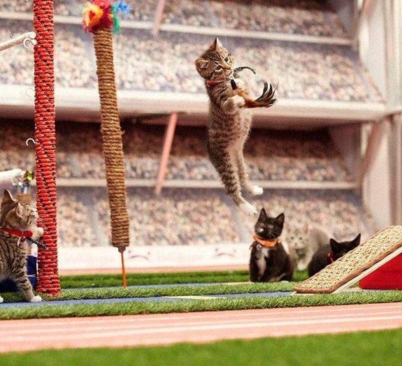 Miaulimpíadas de gatinhos é a coisa mais fofa do esporte no dia de hoje