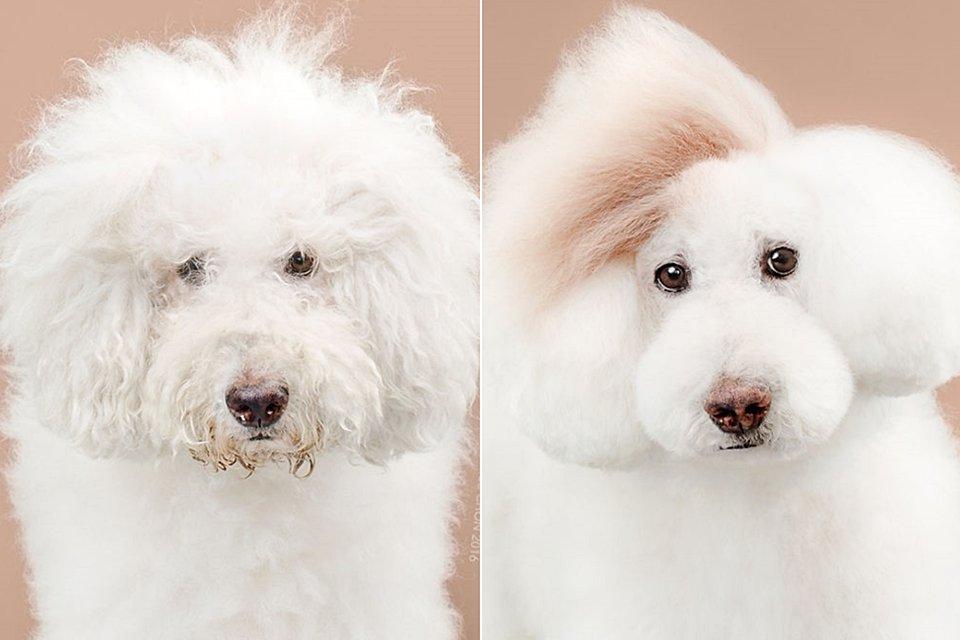 O novo visual destes 8 cães é a coisa mais fofa que você vai ver hoje - Mega Curioso