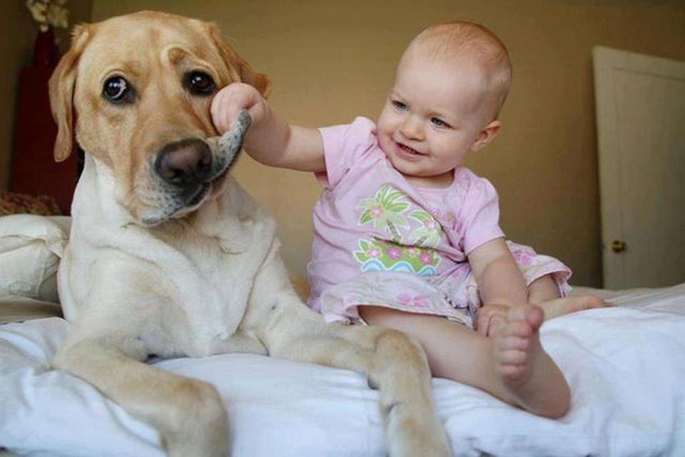 Cães têm inteligência igual à de bebês; veja este e outros 13 fatos caninos - Mega Curioso