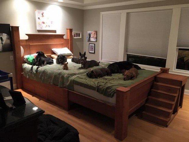 Este casal construiu uma cama gigantesca para dormir com seus 8 cachorros