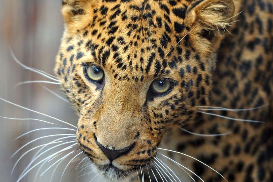 7 animais que todo mundo ama e que podem sumir da Terra - Mega Curioso