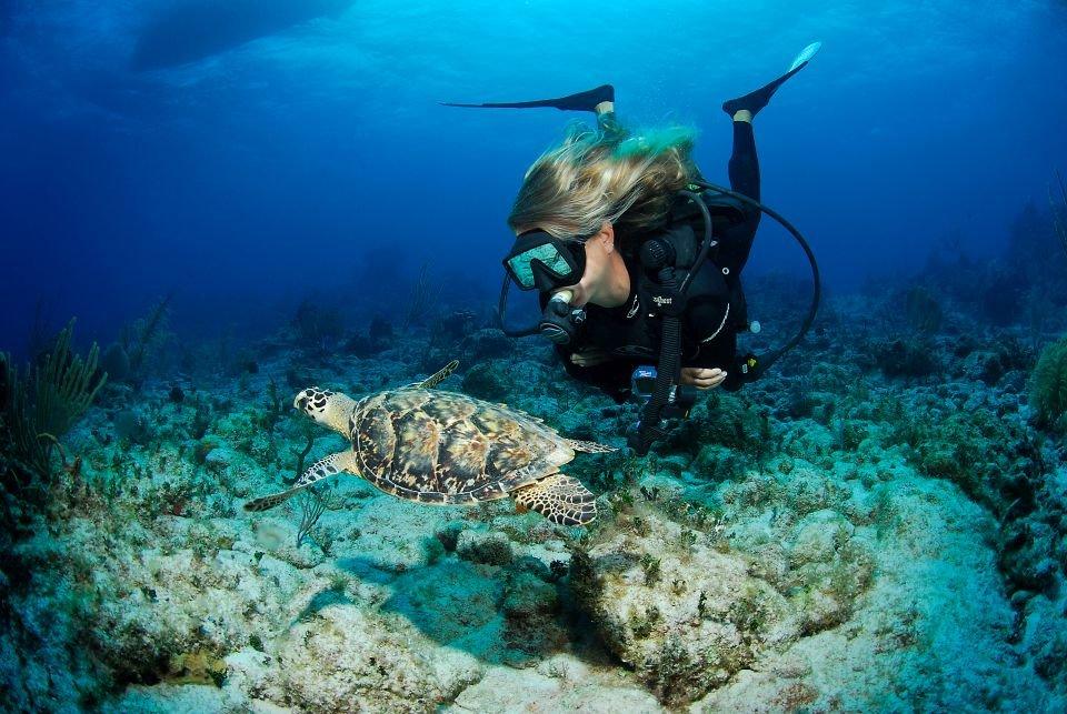 Ilhas Cayman: naufrágios e cidade submersa empolgam os mergulhadores - Mega Curioso