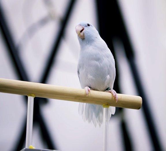 Projeto usa câmera de alta velocidade para entender aerodinâmica das aves