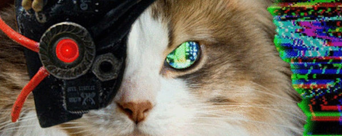 Gatos Do Futuro 3 Poss Veis Cen Rios Da Evolu O Dos Felinos Mega Curioso