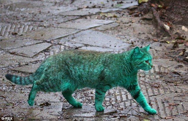 Depois do cachorro azul, agora é a vez do gato verde (e isso também é ruim)