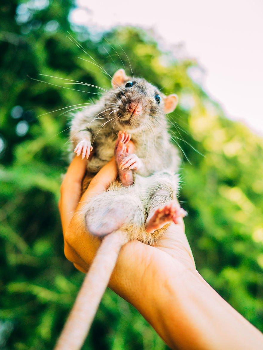 Fotógrafa registra reação de ratos saindo pela primeira vez do laboratório