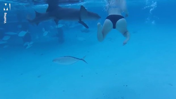Homem filma esposa sendo atacada por tubarão na lua de mel do casal
