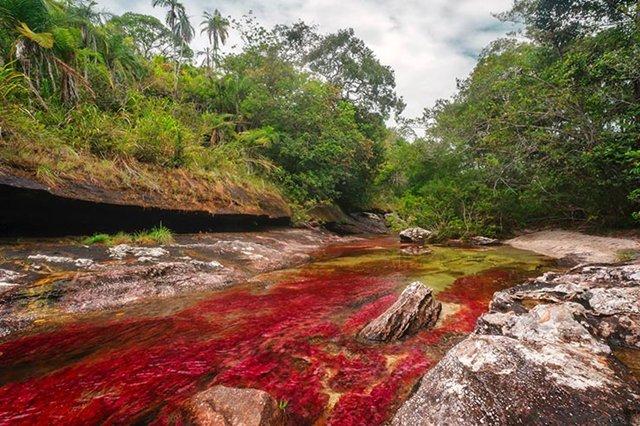 Por que este rio na Colômbia está sendo considerado o mais belo do mundo?
