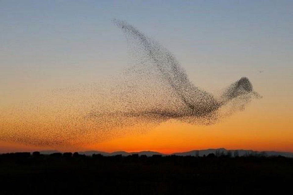 Fotógrafo captura revoada de pássaros e só depois percebe o que registrou -  Mega Curioso