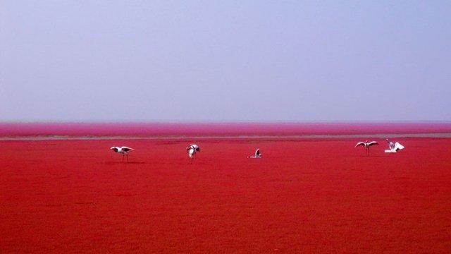Este lugar na China está fazendo o maior sucesso por causa da sua cor
