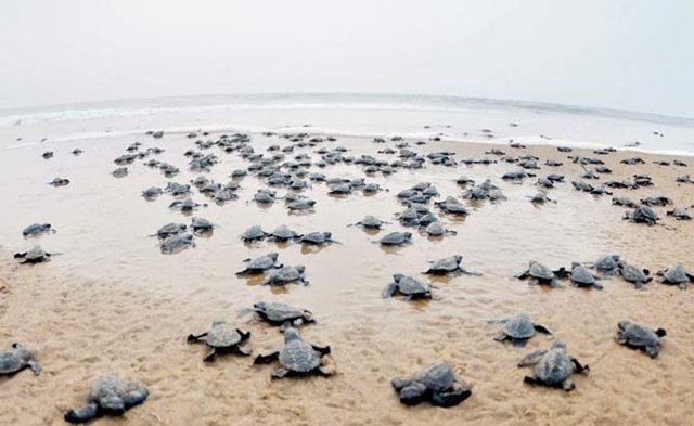 O lixão que virou o maior projeto de recuperação de uma praia da História