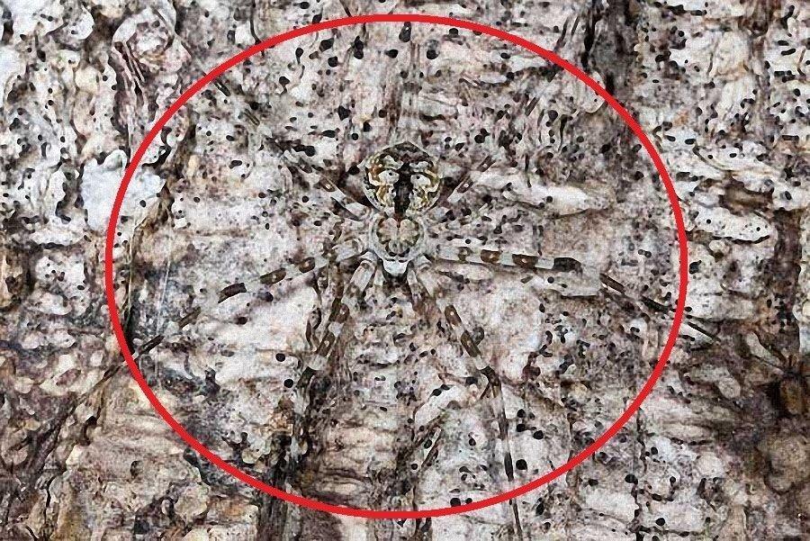 Desafio: será que você consegue achar os animais camuflados nestas fotos?