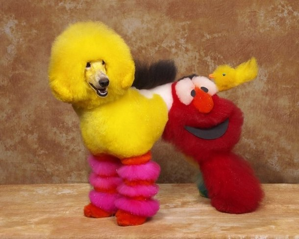 Cachorro colorido