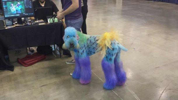 Cachorro ridículo
