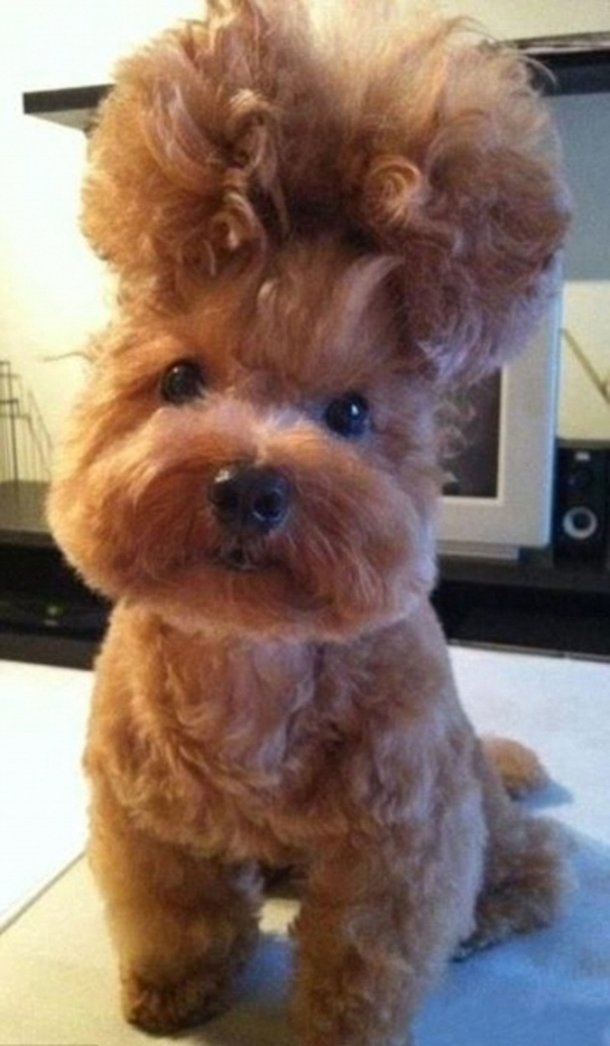Cão fofo