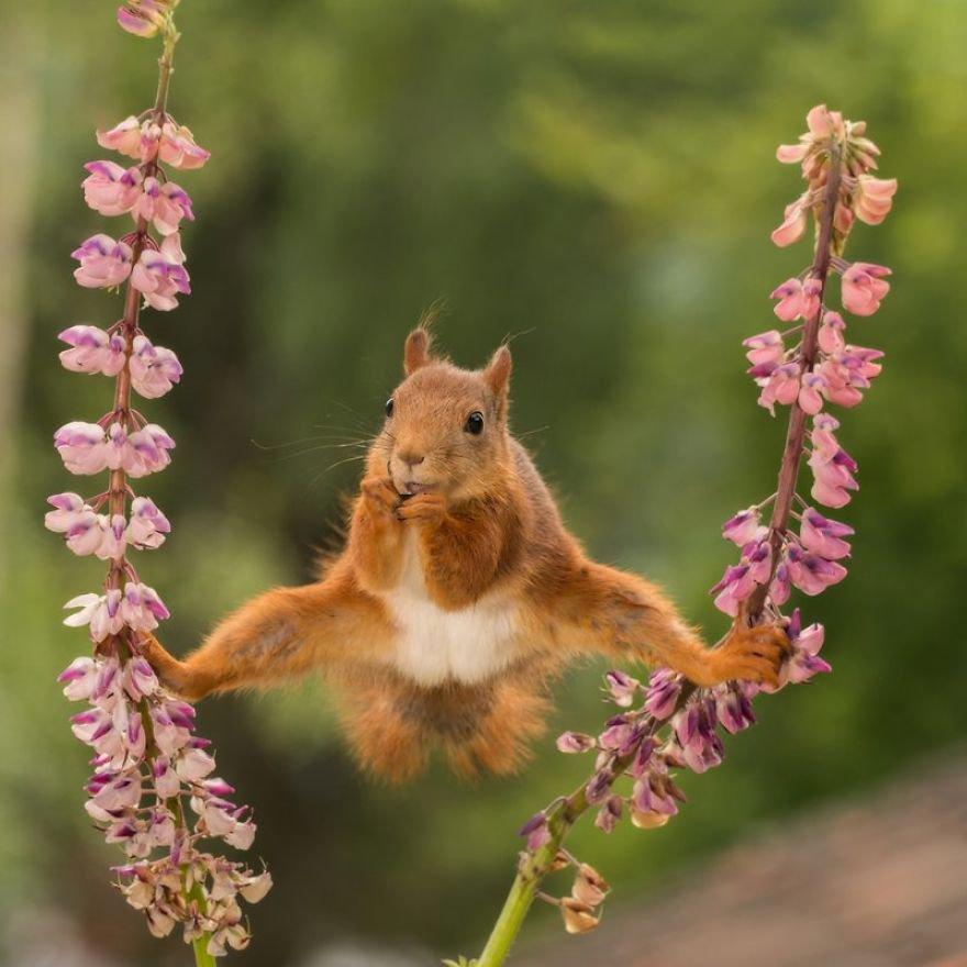 Divirta-se com 41 das fotos mais engraçadas do mundo animal