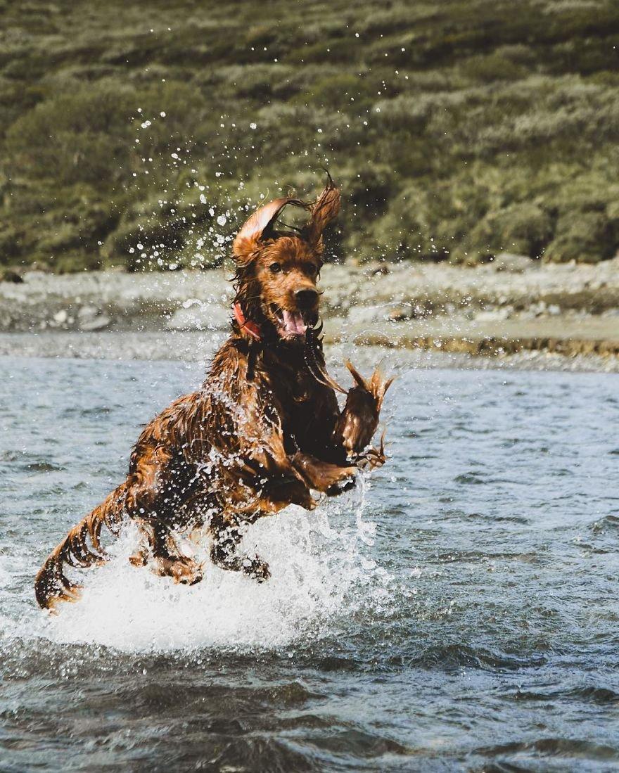 Troja: a cadelinha mais fotogênica de todos os tempos