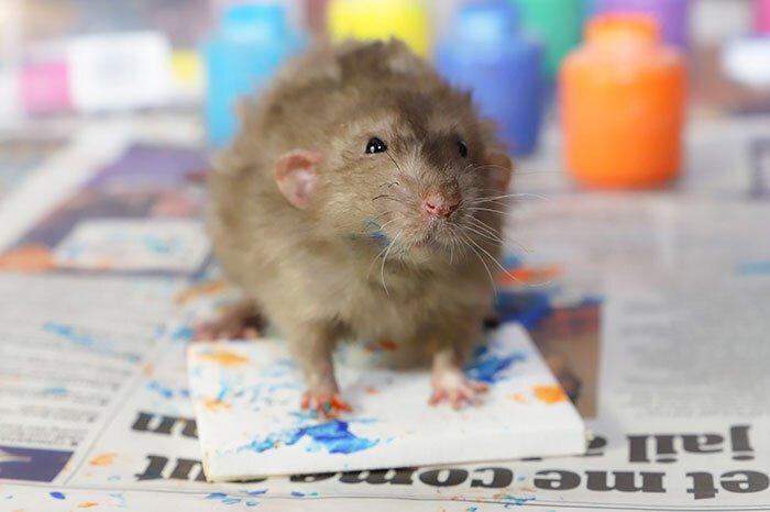 Conheça os ratos pintores e seus quadros adoráveis