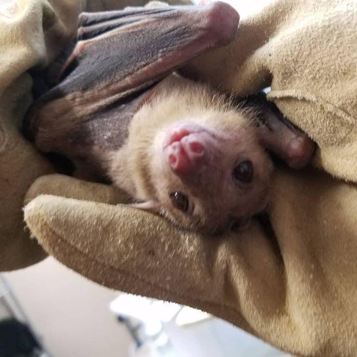 ONG mostra que morcegos não só são fofos, mas também ajudam o meio ambiente