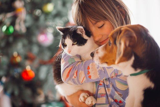 Os gatos e cães possuem habilidades de avaliação pessoal distintas. (Fonte: Freepik/Reprodução)