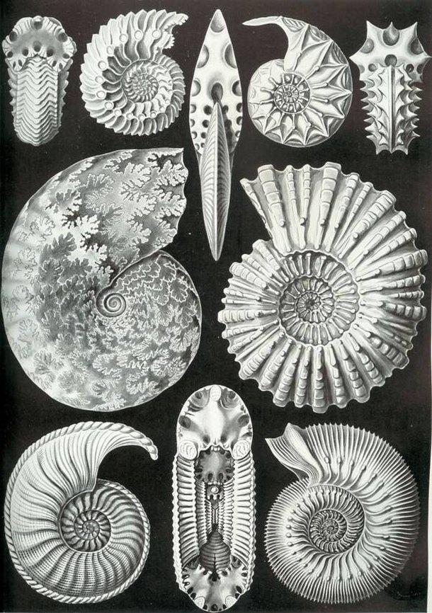 (Fonte: Ernst Haeckel - Wikimedia Commons / Reprodução)