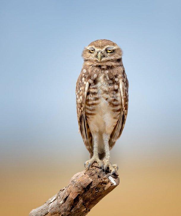 (Fonte: Anita Ross - Comedy Wildlife Photography Awards 2021 / Reprodução)