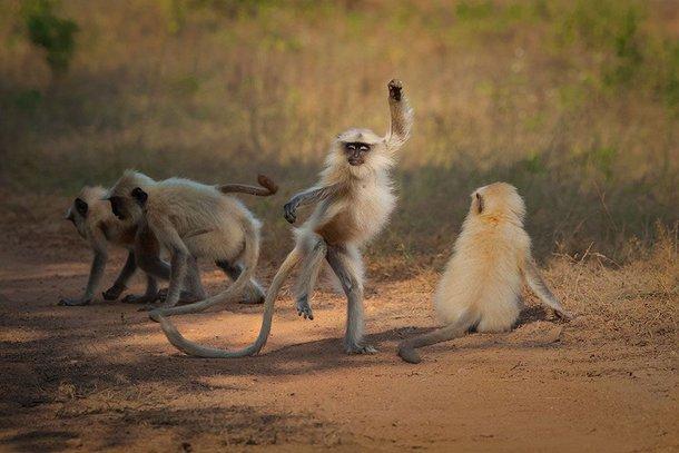 (Fonte: Sarosh Lodhi - Comedy Wildlife Photography Awards 2021 / Reprodução)