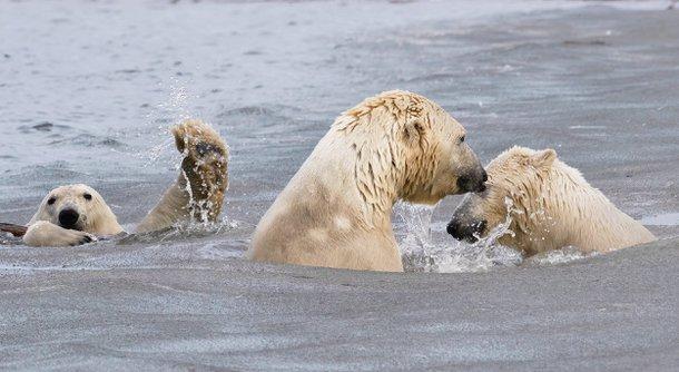 (Fonte: Cheryl Strahl - Comedy Wildlife Photography Awards 2021 / Reprodução)