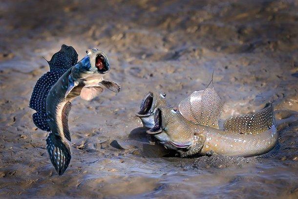 (Fonte: Chi Han Lin - Comedy Wildlife Photography Awards 2021 / Reprodução)