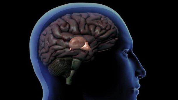 Dibujo de un cerebro humano que muestra la glándula pineal detrás del hipotálamo.