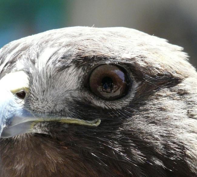 Os olhos mais impressionantes do reino animal [galeria]