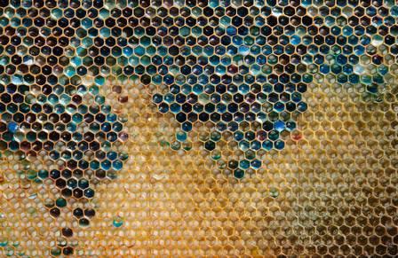 Abelhas 'comem' M&Ms e produzem mel colorido