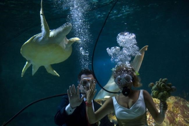 Até que um tubarão os separe? Casal espanhol se casa em aquário tropical