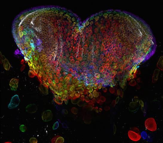 Nikon premia as melhores fotos capturadas com microscópios [galeria]