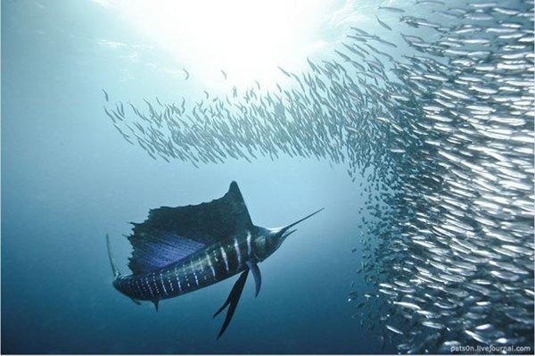 Imagens incríveis revelam detalhes da vida nos oceanos [vídeo]