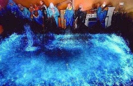 Lulas bioluminescentes dão espetáculo em baía japonesa