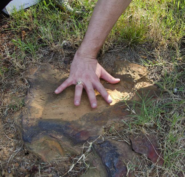 NASA encontra pegadas de dinossauro em centro espacial