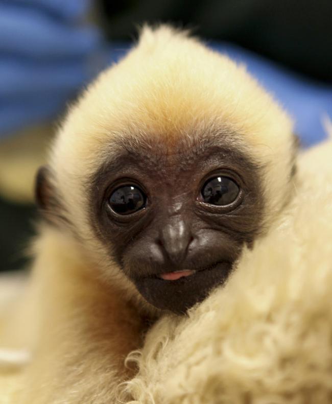 Livro reúne fotos dos 'bebês' mais fofos dos zoológicos [galeria]